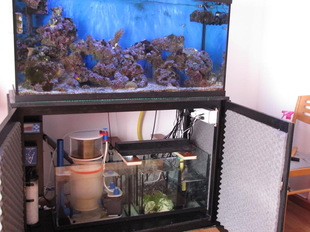 Tipos de filtros para acuarios for Filtro acuario marino